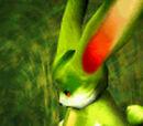 Leaf Hare