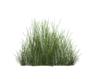 Steppe Grass (Fauna)