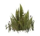 Sword Fern (Fauna)