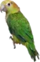 Buddhas Square i14 Parrot.png