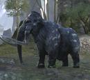 Mammut (Online)