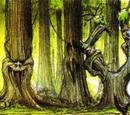 Living Forest/Galería