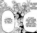 Rokude Pear