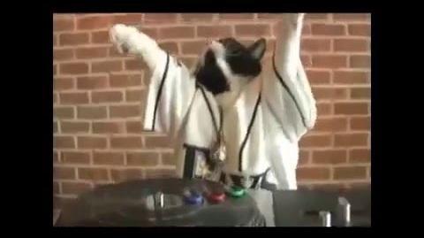 DJ gato-el gato rapero de 50 Cent-0