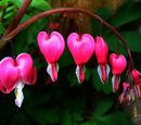 Corazón Floreciente