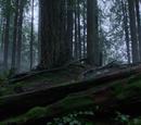 Storybrooke Wilderness Park