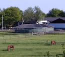 Paardenplaats