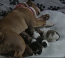 The Carter/Branning puppies