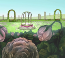 Cure Rose Garden