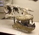 Динозавры Китая