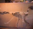 Дейнонихозавры
