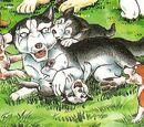 Suzaku's Puppies