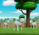 Sheep/Gallery