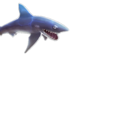 Mako Shark (Evolution)