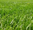 Generic Grass