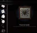 Preserved Spider