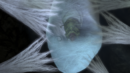 Caterpillar in his cocoon.png