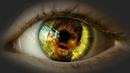 Auge-1.png