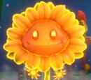 Ognisty Słonecznik