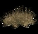 Desert Grass (Narukota)
