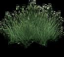 Grassland Grass (Narukota)