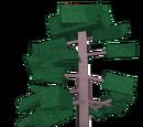 Fir Wood