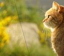猫武士 Wiki