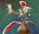 Hare Plant