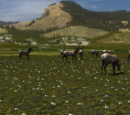 Elk (2.7)