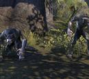 Online: Werwölfe