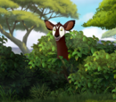 Ajabu/Gallery/The Imaginary Okapi