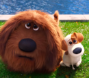 Cool Doggy/The Secret Life of Pets is Out