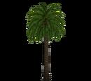 Licuri Palm (Fauna)