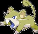 Emile's Rattata