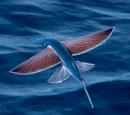Рыба-стрекоза