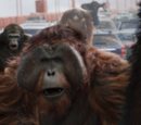 Maurice (Rise of the Planet of the Apes)