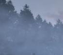 Misty Island/Gallery