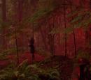 Underbrooke Woods