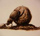 Skull Island Dung Beetle