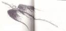 Windwalker 3 Buch.png