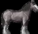 Drum-hevonen