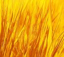 Generous Grass