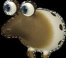 Bulbo Vermilengua