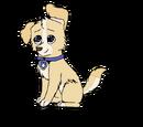 Vito (Puppy)