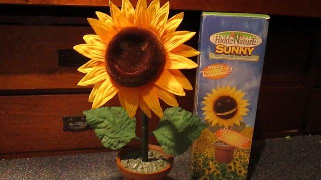 Sunny the Singing Sunflower-0