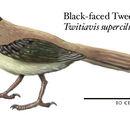 Spec Dinosauria: Twitiaviformes