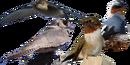 Apodiformes diversity.png