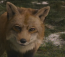 Fox (Narnia)
