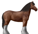 Koń Drum