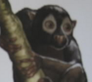 Burglar Monkey